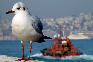 Seagull and Bosphorus by serdalguzel
