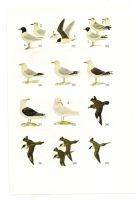 Antique birds print 5 by OMEGA86