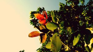Leafs in the sun by RicheliVargas