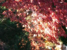 Autumn Foliage in the Sun by Elle-Arden