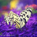 Paradise of Butterfly V by WindyLife