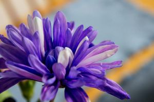 Colorful Flowers III by LDFranklin