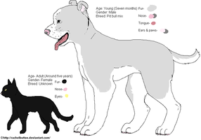 Pitbull and cat ref by RachelButton