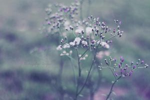 The peace of wildflowers by simplysuzu