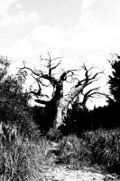 Baobab by tmcguire