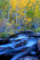 Eastern Sierra Creek and Aspens by sellsworth