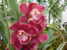 More Orchids 5 by shelldevil