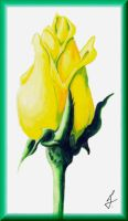 Tulip for Tammara by ricky4