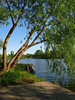 Tree by the Lake by AgiVega