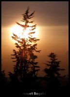 pine and sunset by tomegatherion