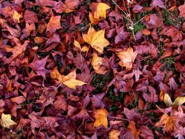 Scattered Leaves by pearchel