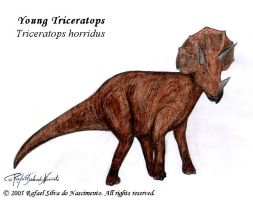 Young Triceratops by RSNascimento