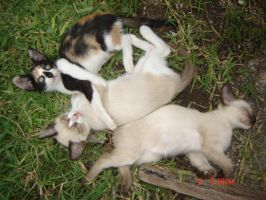 mis kittys by zoesaday