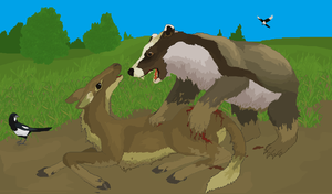 Badger Bear Springs an Attack on a Flagtail Deer by Sheather888