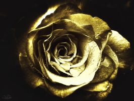 golden rose by kouki1