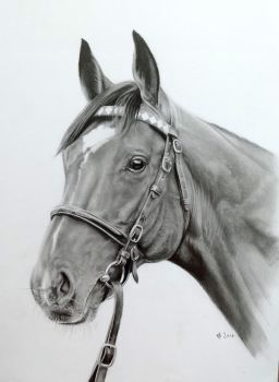 Frankel 14 s by CBailey52