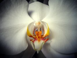 Orchid retouch by NagaOne-Chan
