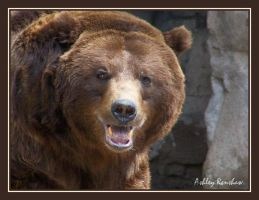 Grizzly Smile by Unconventionals