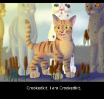 Crookedkit's New Name by Jayie-The-Hufflepuff