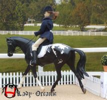 Appaloosa in dressage by Lady-Orcanie