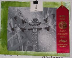 Resting Dragon fly ribbon by HarvestPicori