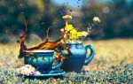Coffee Splash by Tamerlana
