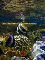 Pacific Reef II by xXCold-FireXx
