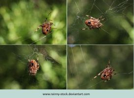 Orb Spider Pack- 1- STOCK by Rainny-Stock