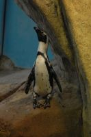 penguin by whynotastock
