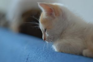 pablo the cat by andreea10