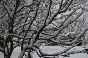 Snow branches by TomKilbane