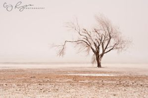 Deserted 2 by creynolds25