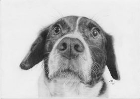 Curious Dog Graphite by Kalgoras