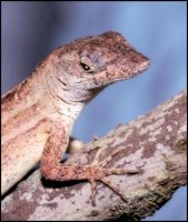 Anole Portrait by craftworker