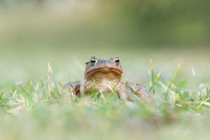 Toad IV by Justysiak