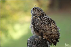 2010-292 Autumn Owl by W0LLE