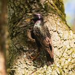 The starling's hollow by starykocur