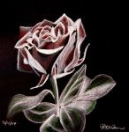 White Charcoal Rose by jessicamelrose