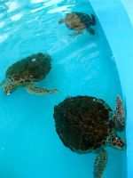 Turtles by Seigner