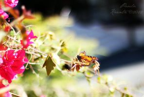 Butterfly 2 by Thilu