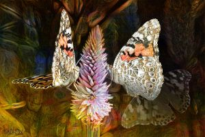 Butterflies on Flower by Tackon