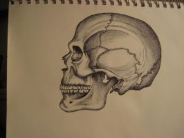 Anatomical drawing of skull #2 by Salamanderskin