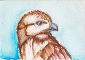 Red tailed hawk postcard by ArcticIceWolf