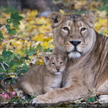 Mothers Pride 0658n by Haywood-Photography