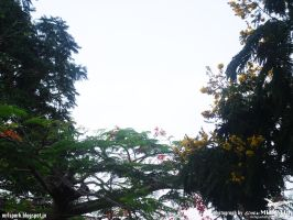trees with flowers (photograph by spark MURALI.K) by sparkmurali