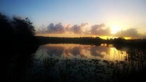 Everglades Feb 1 14 Pic 2 by shawamy2