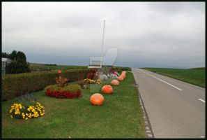 Marrows at the edge of the road... by alfa