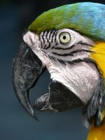 Parrot in Gatorland by jelbo