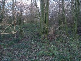 Copse stock 10 by RSmales