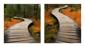 Swamp path twisted I by iram